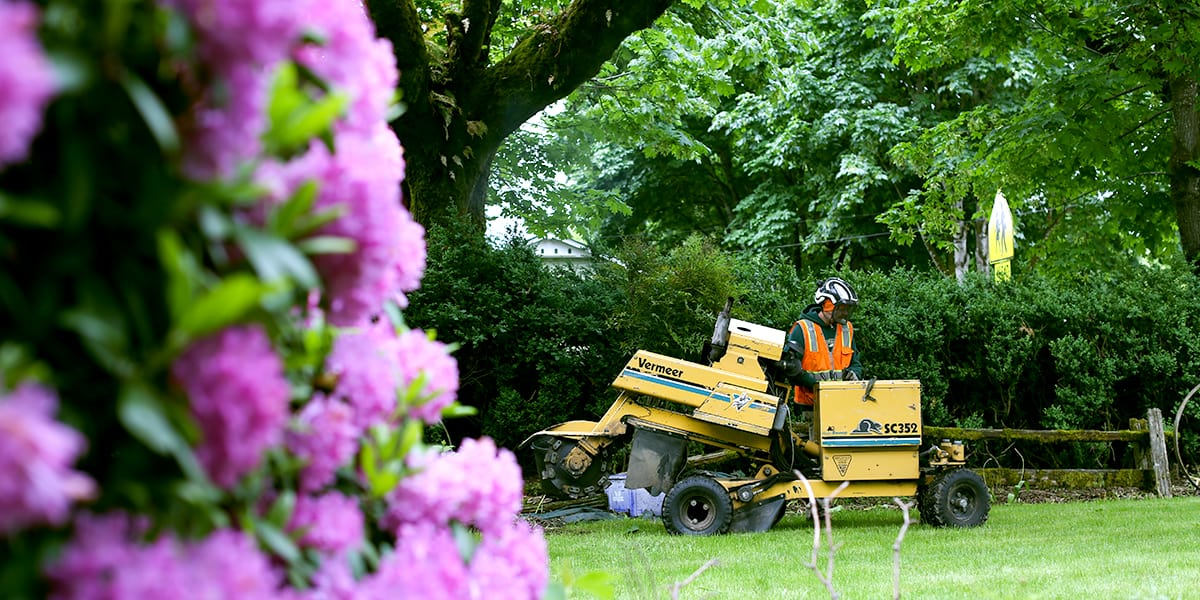 stump grinder used to create curb appeal to sell a home