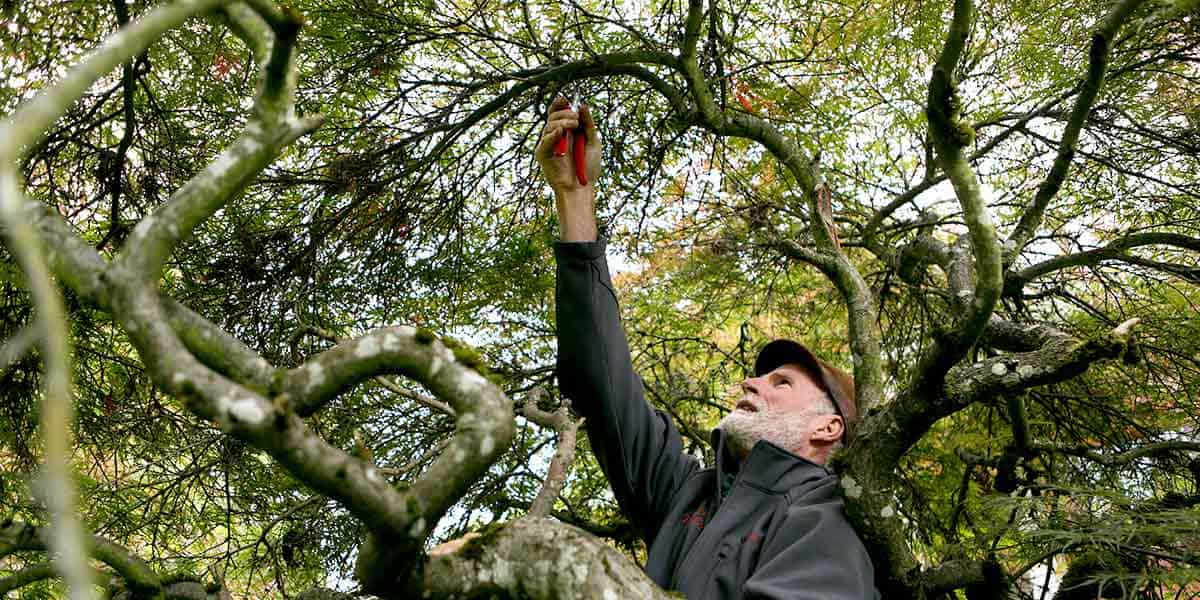 pruning tree with hands and tools