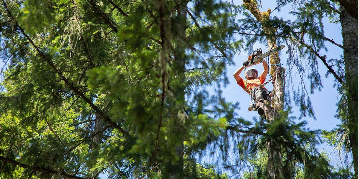 removing a tree and preparing for winter season
